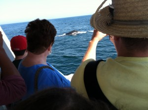 Up close and personal with a humpback whale from the deck of the Seven Seas tour boat.
